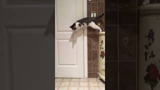 Cat Opens Door for Buddy