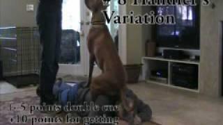Sit Challenge - Jacksonville Dog Training