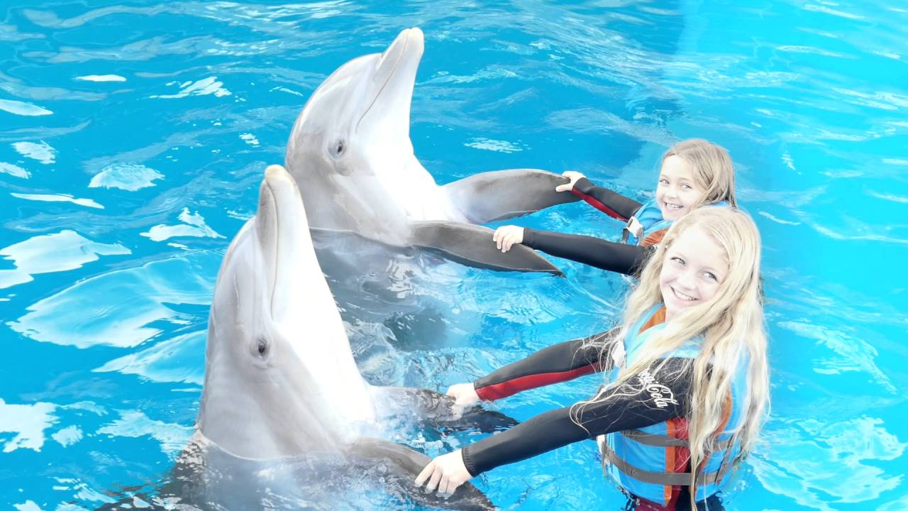 Swim With Dolphins At Gulf World In Panama City Beach