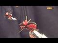 Escarabajo de Goma Eva. Mosca fácil para carpa y barbo