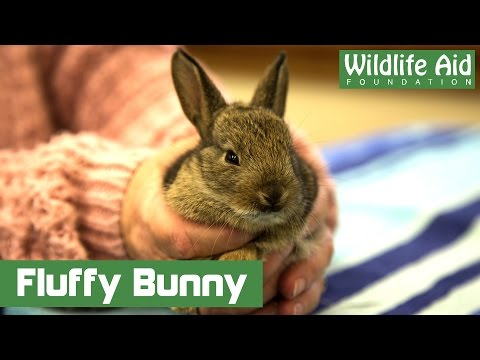 Fluffy baby rabbit goes to hospital