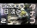 タナゴとアクアテラリウム【生体導入】