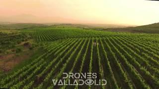 Viñedos - Drones Valladolid