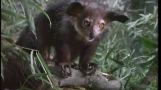 Zoboomafoo: Superclaw (Complete Episode) Part 2/2