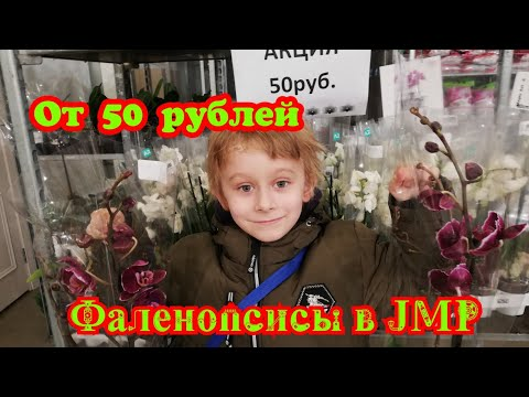 Фаленопсисы в JMP от 50₽ ФУД СИТИ.