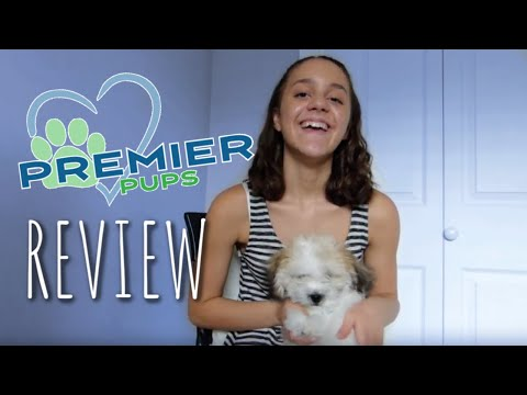 PREMIER PUPS REVIEW - YouTube