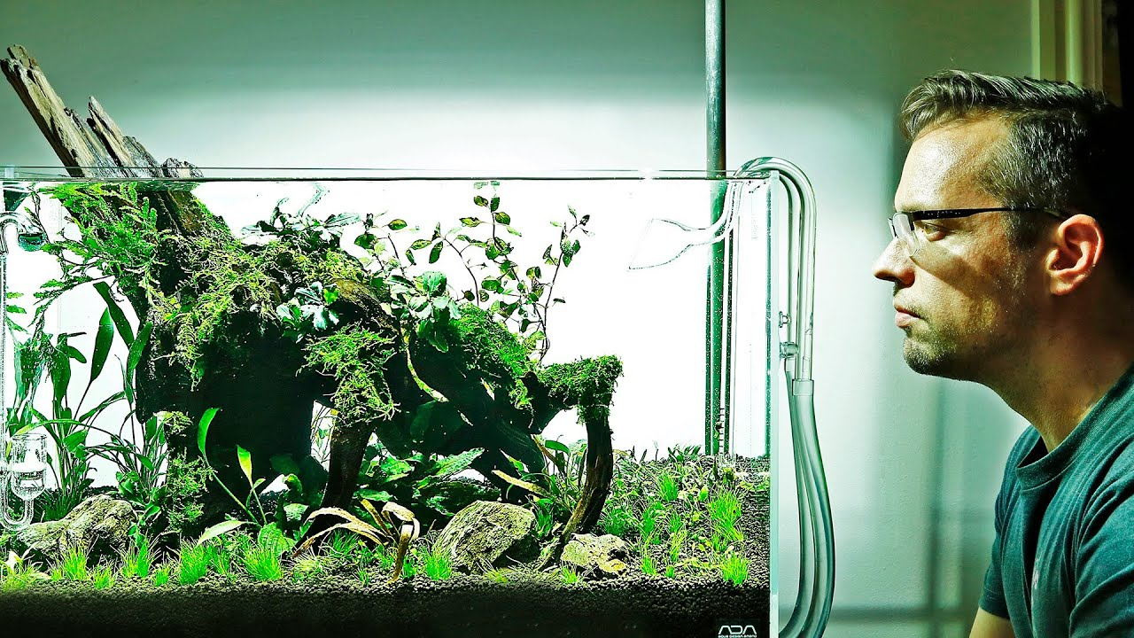 How to aquascape a Nature Aquarium - ADA 60P - YouTube