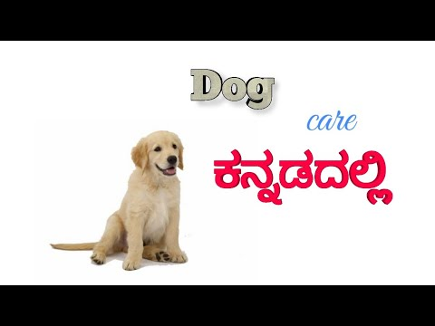 dog care in Kannada . dog breeding in kannada