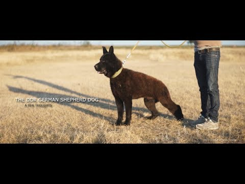 THE DDR GSD - A FEW THOUGHTS