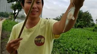 Làm Mồi Câu Cá Rô Đồng l Wild Fish Hunter