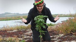 Канада 572: Кто обычно курит марихуану
