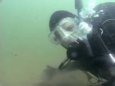 Episode 24 - New England Marine Ecosystem, Part 2