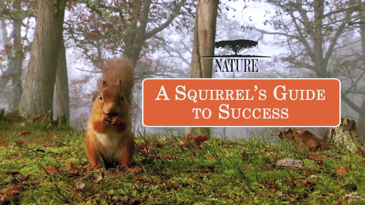 nature a squirrel s