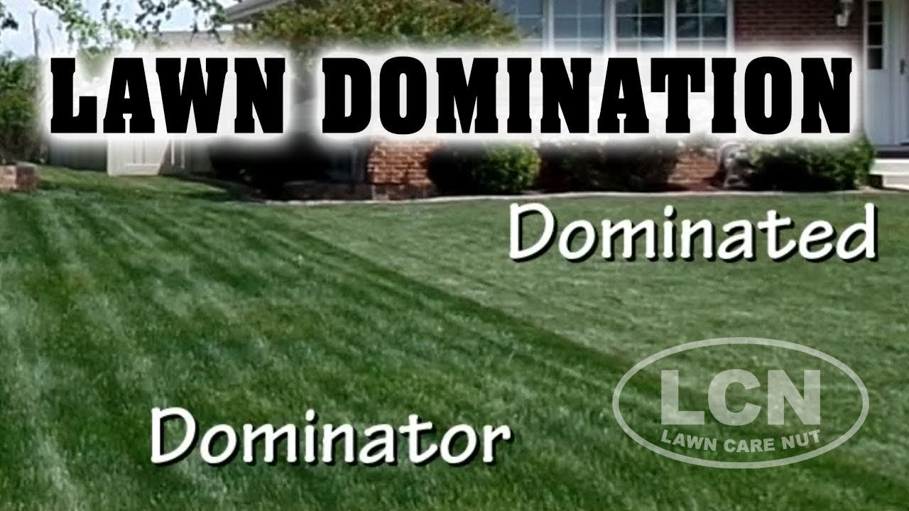 How To Dominate Your Neighbor 39 S Lawn Youtube