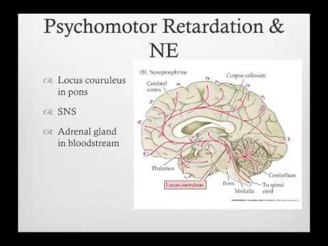 Sapolsky Ch 14 psychomotor retardation depression and ...