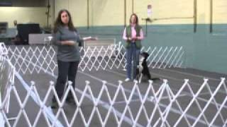 Dog Training Pattern Games By Leslie Mcdevitt
