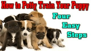 How To Potty Train A Puppy Cherry Hill NJ  ► 4 EASY STEPS ◄ Puppy Training Cherry Hill