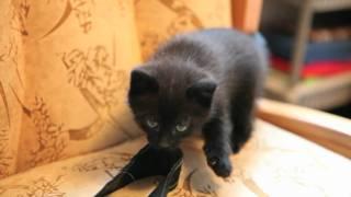 Помогите выбрать коту имя!
