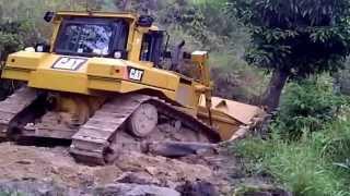 Bulldozer por fin derriba el árbol