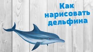 Как нарисовать дельфина | How to draw a dolphin(Вот а почему бы не нарисовать дельфина? Конечно нарисуем, а как же! :D ============================ ▻ Группа Вконтакте..., 2016-04-17T11:39:40.000Z)