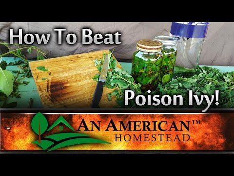 How To Beat Poison Ivy FAST!
