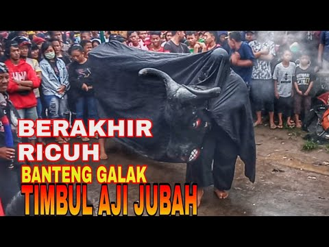 Bantengan Kalap Berakhir Ricuh Timbul Aji Jubah Live Kedaton Trowulan