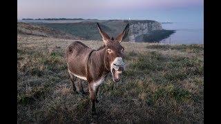 Смешные, прикольные животные 2019. НОВИНКА/ funny animals 2019