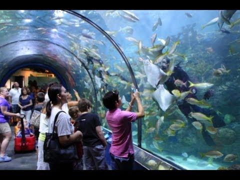 Audubon Aquarium Of The Americas New Orleans Louisiana