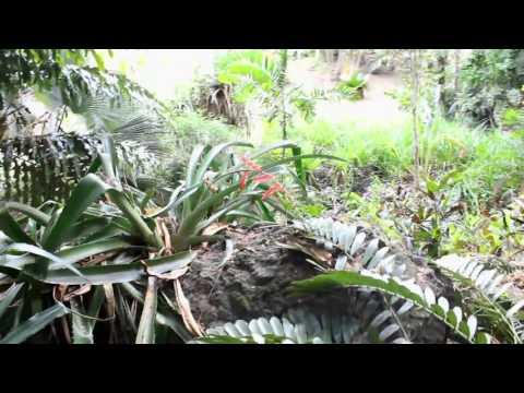 Garden of the sleeping giant in Fiji