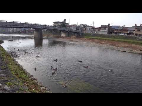 Look at the river in Kyoto - Kamogawa