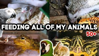 Feeding All of My Animals! (50+ exotic pets)