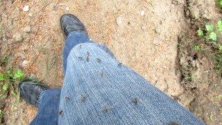 Комары облепили.