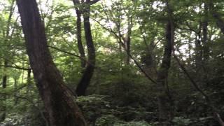 東大和公園~こもれびの谷