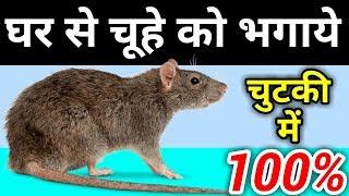 How hounded rat/घर में नहीं रहेगा एक भी चूहा, चींटी और मक्खी, जाने भगाने के टिप्स  2017