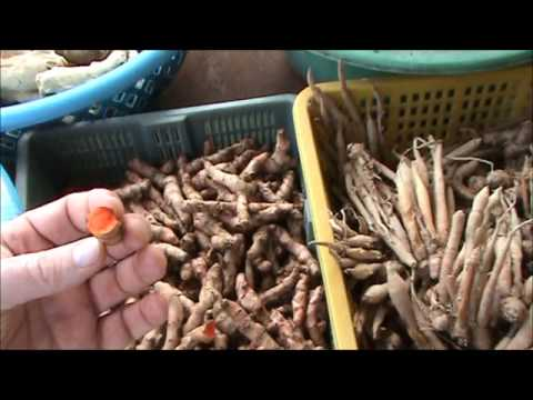 THAI FOOD – Thai fresh vegetable market in Koh Phangan in Thailand – the Happiest Place on Earth