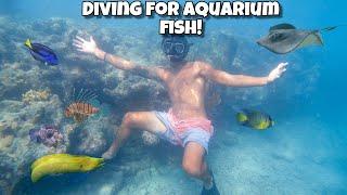 diving-for-tropical-aquarium-fish-pt-2