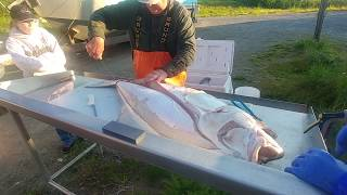 Alaskan Halibut Fishing  Filleting the Catch
