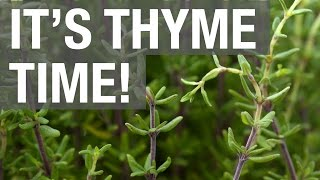 It's Thyme Time!