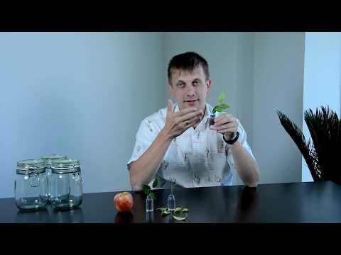 Агросекреты: Стробилуринсодержащие фунгициды