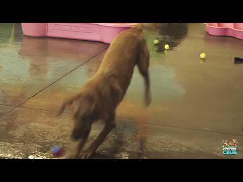Dog Pool Club San Carlos CA Indoor Dog Park and Swimming Pools
