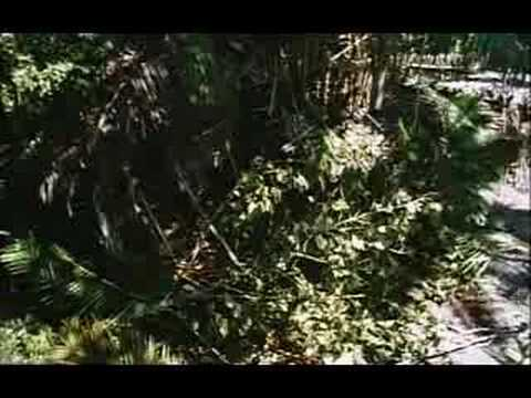 Daniel Defoe's Robinson Crusoe - Trailer from YouTube · Duration:  2 minutes 37 seconds