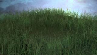 Трава, небо, дождь, маленькое озеро. Cinema 4d.