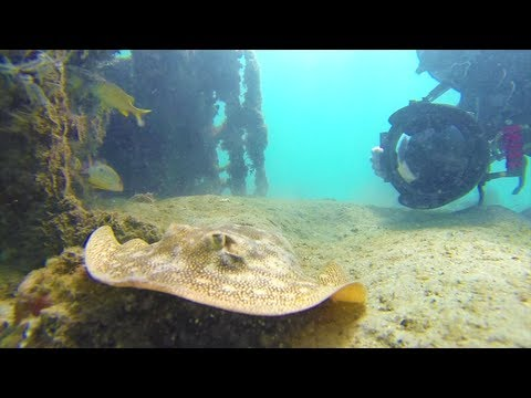 Blue Heron Bridge Dive Florida
