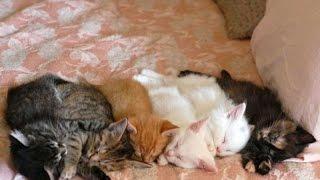 Животные. Красивые кошки, коты и котята. Слайд-шоу из фотографий.