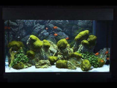 Juwel Aquarium Rio 125 Einrichtungsbeispiel / Tutorial