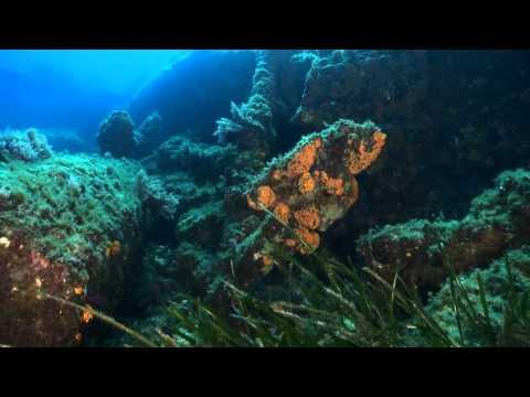 Lo Scalone, Capo Peloro - Oloturia Sub diving Messina