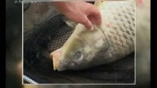 Карповая ловля. Прикормки и насадки http://fish73.ml/