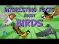 Interesting Facts about Birds | Educatio