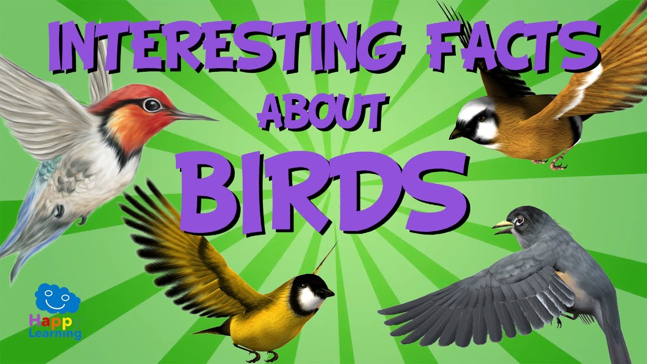 interesting facts about birds educational video for kids youtube