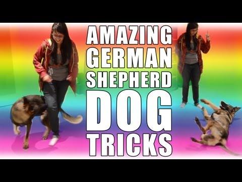 Amazing German Shepherd Dog Tricks!